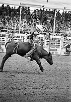 """Calgary Stampede 1996.<br /> Foto: Jens Panduro Sort/hvide billeder taget under Calgary Stampede i 1996. <br /> Calgary Stampede er et årligt rodeo, udstilling og festival holdt hver juli i Calgary, Alberta, Canada. Den ti-dages begivenhed, som regner sig som """"Det største udendørs show på jorden"""", tiltrækker over en million besøgende om året og har en af verdens største rodeoer, en parade, sceneshows, koncerter, dyrskue og landbrugskonkurrencer."""