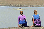 Tourists Viewing Hippopotamus