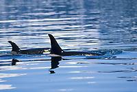 Marine Wildlife Favs