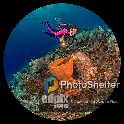 27 July 2015: SCUBA Diver Sally Herschorn explores the formations at School House Reef, on the North side of Grand Cayman Island. Located in the British West Indies in the Caribbean, the Cayman Islands are renowned for excellent scuba diving, snorkeling, beaches and banking.  Mandatory Credit: Ed Wolfstein Photo *** RAW (NEF) Image File Available ***