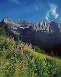 Fireweed flower and the Continental Divide along Going to the Sun Road, Glacier National Park, Kalispell, Montana, USA John offers private photo tours in Glacier National Park and throughout Montana and Colorado. Year-round.