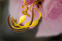 Extreme close-up of pink flower pistil, stamen and ovaries
