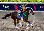 January 24, 2019: Bravazo exercises as horses prepare for the Pegasus World Cup Invitational on January 24, 2019 at Gulfstream Park in Hallandale Beach, Florida. John Voorhees/Eclipse Sportswire/CSM