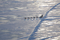Tuesday March 13, 2007   ----   A musher runs on the Norton Sound sea ice between Shaktoolik and Koyuk on Tuesday morning.