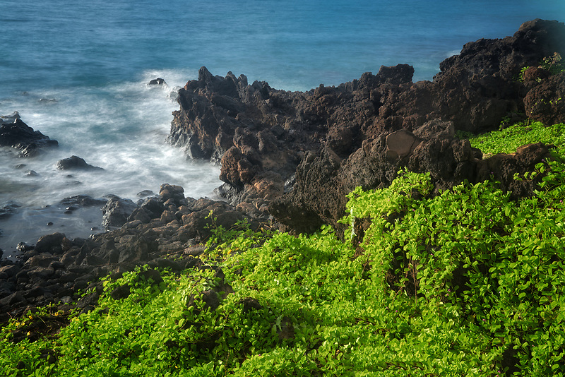 Vegetation and ocean . Wailea. Maui, Hawaii.