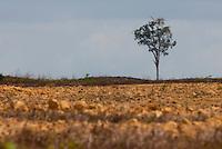Próximo a cidade área para plantação de soja.<br /> <br /> Paragominas, Pará, Brasil.<br /> Foto Paulo Santos<br /> 04/11/2009