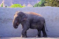 Elephant at the Honolulu Zoo