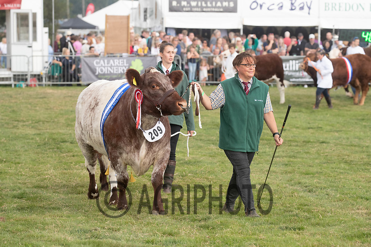 4-9-2021 Moreton In Marsh Show 2021<br /> ©Tim Scrivener Photographer 07850 303986<br />      ....Covering Agriculture In The UK....