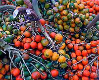 Alimentos, frutas Pupunha. Foto de Ricardo Azoury.