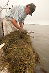 David Laird scrapes for soft crabs and peelers near his home on Smith Island, in his boat of more than 50 years, Scotty Boy