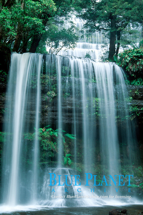 Russell Falls, temperate rainforest, Mt Field National Park, Tasmania, Australia