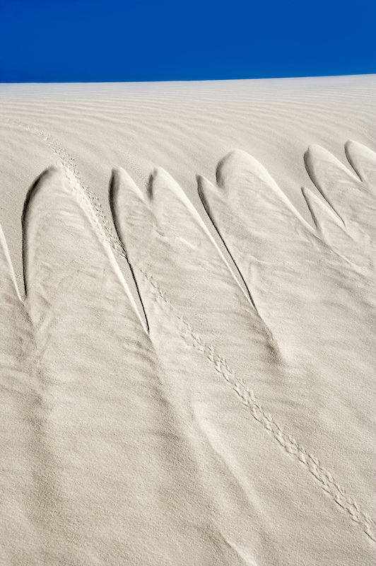 Sand slide with animal tracks. White Sands National Monument. New Mexico