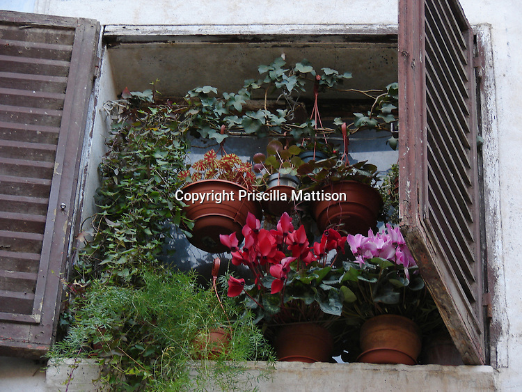 Rome, Italy - February 1, 2007:  Plants are crowded into the space outside a window.
