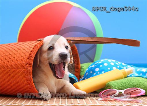 Xavier, ANIMALS, dogs, photos(SPCHdogs504c,#A#) Hunde, perros