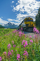 Alaska Railroad whistle stop at Grandview  in the Chugach National Forest, Alaska
