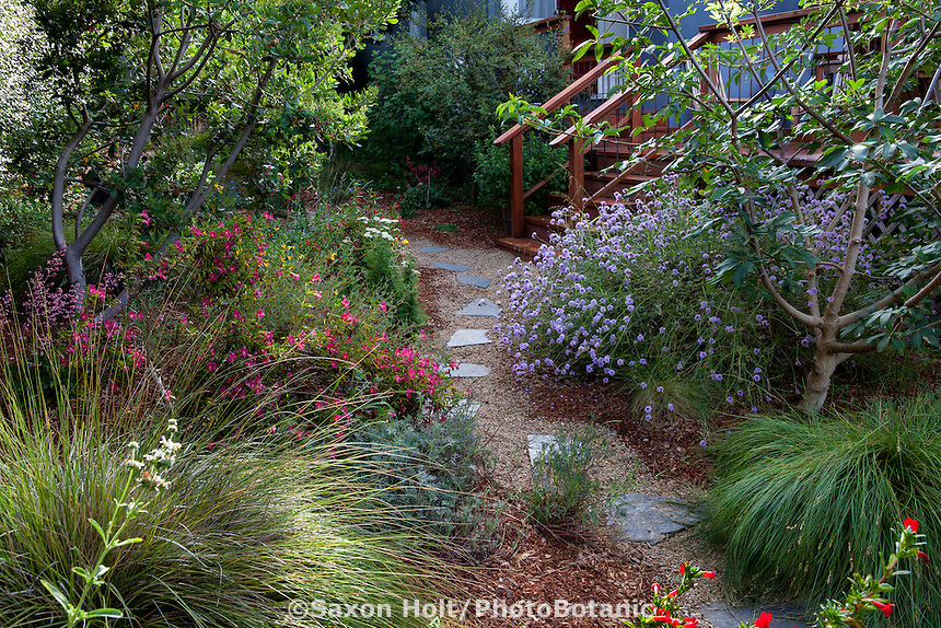 Stepping stones on permeable path through sideyard with California native plants, Heath-Delaney garden