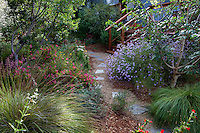 Stepping stones on permeable path through sideyard with California native plants, Heath-Delaney garden