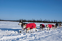 Ray Redington Jr. dogs on the trail just before the Cripple checkpoint 1/2 way into the race during the 2010 Iditarod