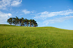 Europa, DEU, Deutschland, Baden-Wuerttemberg, Schwaebische Alb, Owen, Albtrauf, Auf dem Berg Hohenbol, Gipfel, Baumgruppe, Schwarzkiefern, Natur, Umwelt, Landschaft, Jahreszeiten, Stimmungen, Landschaftsfotografie, Landschaften, Landschaftsphoto, Landschaftsphotographie, <br /> <br /> [Fuer die Nutzung gelten die jeweils gueltigen Allgemeinen Liefer-und Geschaeftsbedingungen. Nutzung nur gegen Verwendungsmeldung und Nachweis. Download der AGB unter http://www.image-box.com oder werden auf Anfrage zugesendet. Freigabe ist vorher erforderlich. Jede Nutzung des Fotos ist honorarpflichtig gemaess derzeit gueltiger MFM Liste - Kontakt, Uwe Schmid-Fotografie, Duisburg, Tel. (+49).2065.677997, ..archiv@image-box.com, www.image-box.com]