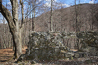 """Switzerland. Canton Ticino. Miglieglia. The """"Sentiero delle Meraviglie"""" is a walking path. The remains of the Miglieglia castle are on the rocky, moraine-covered spur overlooking the magliasina gorge. The construction was part of a fortified observation line. The """"Sentiero delle Meraviglie"""" is a guided trail which is plunged into nature, but every so often signs of human activity appear. Miglieglia is located in the Malcantone area. 16.03.2010 © 2010 Didier Ruef"""