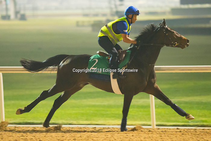 DUBAI,UNITED ARAB EMIRATES-MARCH 29: Cloth of Stars,trained by Saeed Bin Suroor,exercises in preparation for the Dubai Sheema Classic at Meydan Racecourse on March 29,2018 in Dubai,United Arab Emirates (Photo by Kaz Ishida/Eclipse Sportswire/Getty Images)