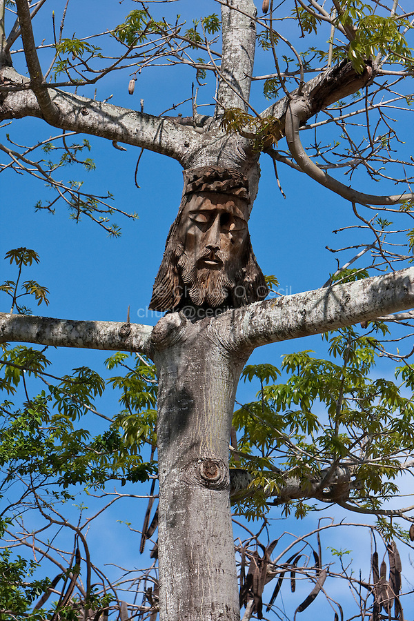 Face of Christ Carved into a Living Tree.  Xcaret, Riviera Maya, Yucatan, Mexico.
