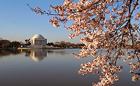 Cherry Blossoms Tidal Basin Washington DC<br /> Cherry Blossoms blooming around the Tidal Basin in Washington, DC symbolize the natural beauty of our nation's capital city and has become part of Washington, D.C.'s rite of spring. Landmarks include the Jefferson Memorial, Washington Monument, and US Capitol. A popular tourist attraction and travel destination for many visiting Washington, D.C.