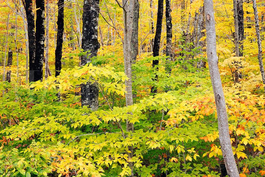 Fall landscape and autumn foliage, Mount Desert Island, Acadia National Park, near Bar Harbor, Maine, USA