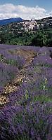 Europe/France/Provence-Alpes-Côte d'Azur/84/Vaucluse/Aurel: Le Village et champ de Lavande du plateau de Sault