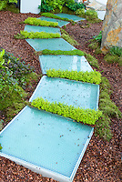 Modern garden walkway path with crevice plantings of fragrant thymes thymus, mulched backyard