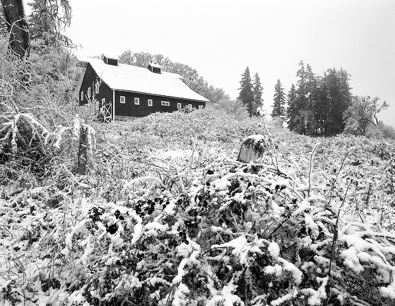 F00130M.tiff   Barn, snow and blackberrry bushes in fall color. Finley Wildlife Refuge, Oregon
