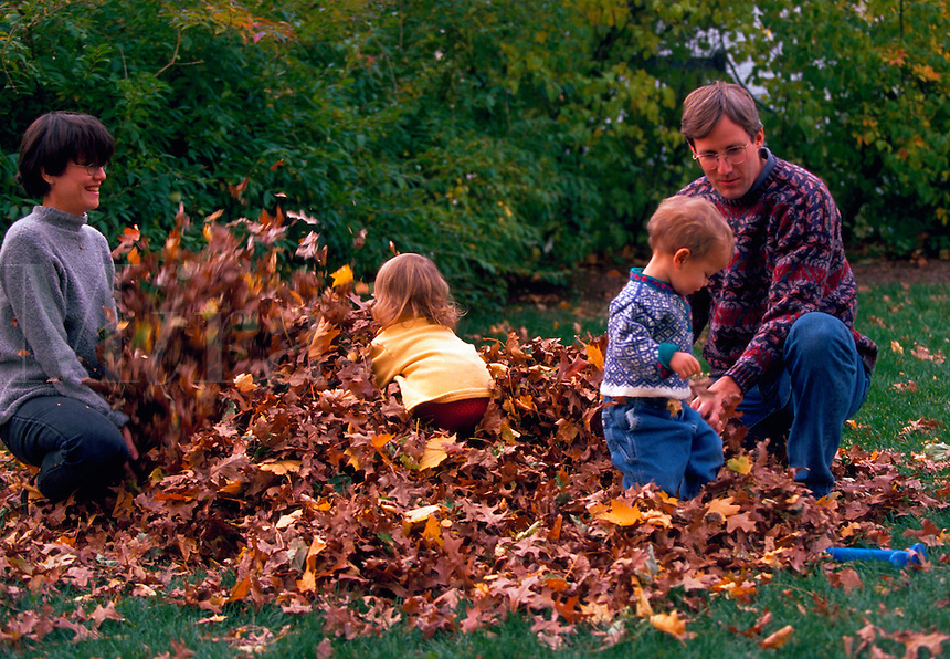 Fraternal twin toddlers playing in pile of leaves with parents.