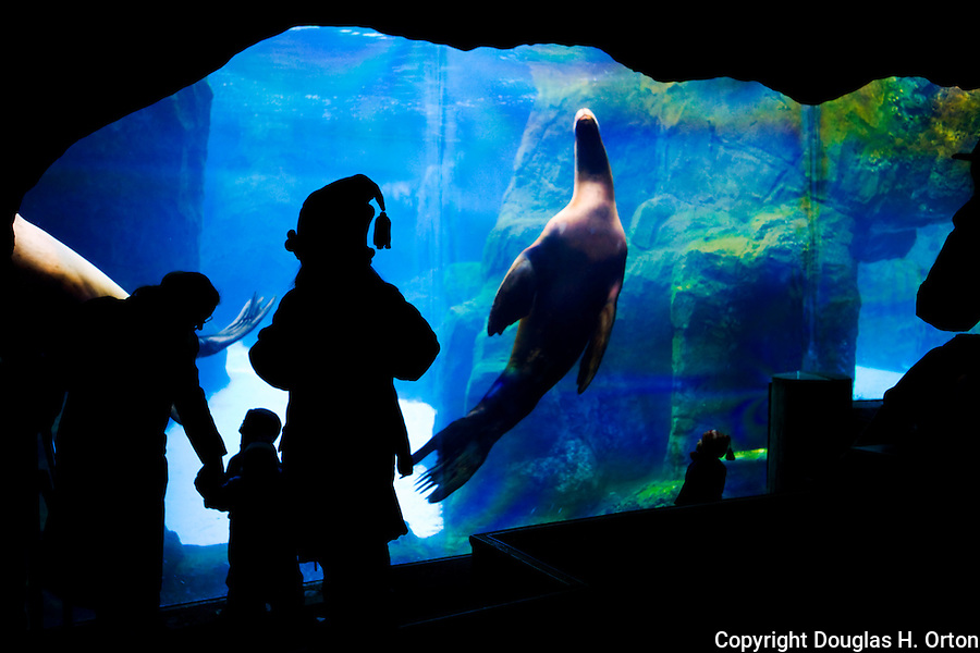 Children and family watch sea lions at aquarium exhibit at the Portland, Oregon zoo.