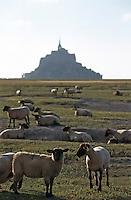 """Europe/France/Basse-Normandie/50/Manche/Mont St Michel: les moutons de pré-salé dits""""grévins"""" de Phillipe Farcy berger"""