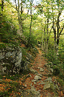 Corsica,  Woodland path near the Col de Verde, part of the GR20..