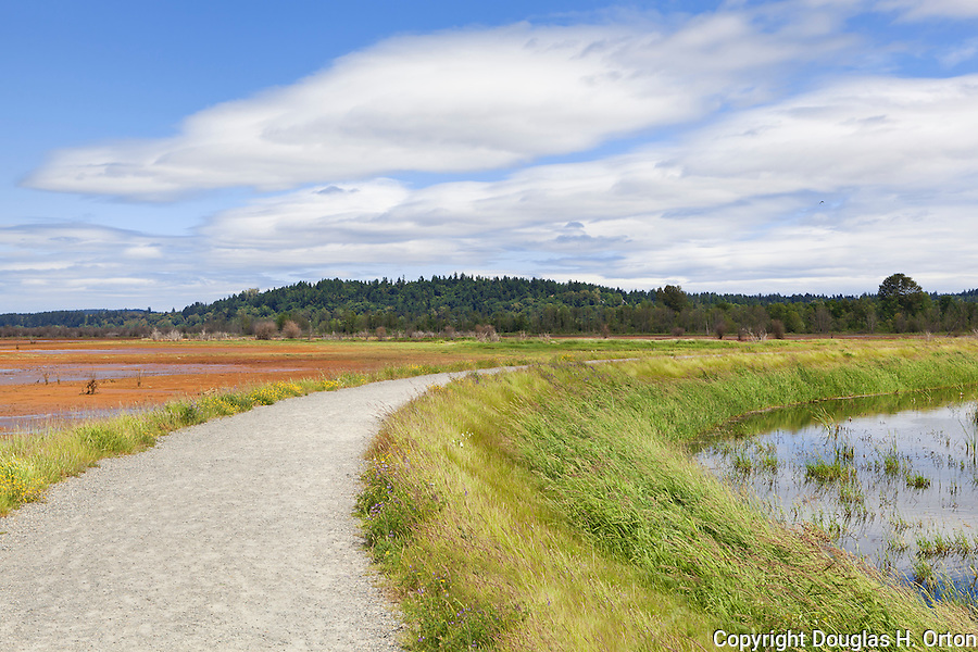 Dike Trail, Nisqually River Delta, Tidal Marsh, and Estuary, Nisqually National Wildlife Refuge, Washington State.  Formerly diked to enable farming, dikes were breached in 2009 and the marsh is recovering.