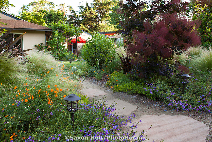 Stepping stone path through borders with wildflowers in Habets backyard garden, Pleasant Hill, California