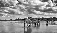 Elephants often travel in family herds led by a matriarch.<br /> <br /> This image was the grand prize winner of the 2014 MalaMala photo competition.