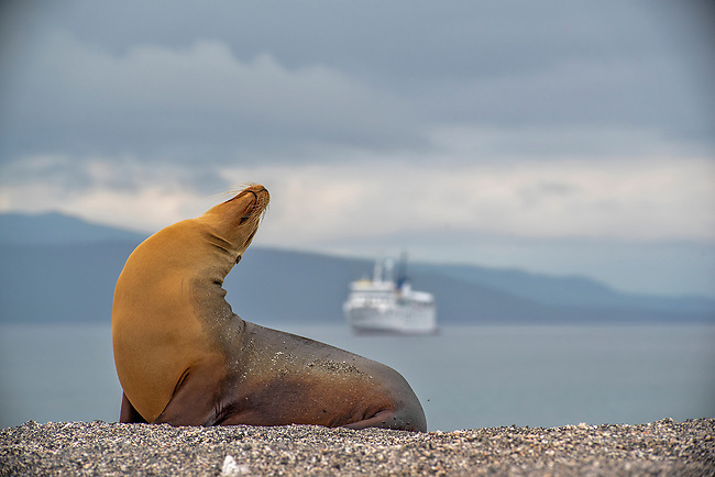 UnCruise, Galapagos
