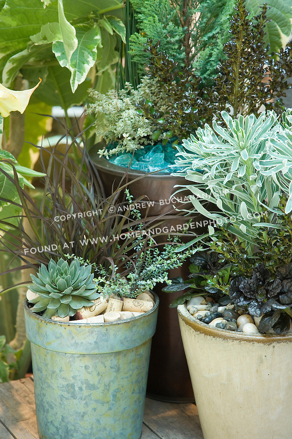 """In this blue-green motif, stones, corks, and aqua-colored tumbled glass share the mulching duties and mimic the colors of, among others, Hens-and-chicks 'Lavender and Old Lace', silver thyme, and Phormium 'Jack Spratt'  (all in left """"cork"""" pot), Euphorbia 'Glacier Blue' (right """"stones"""" pot, tall middle), and Ajuga 'Black Scallop' (right """"stones"""" pot, low middle)."""