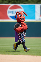 Hickory Crawdads mascot Conrad runs across the field between innings of the game against the Charleston RiverDogs at L.P. Frans Stadium on May 13, 2019 in Hickory, North Carolina. The Crawdads defeated the RiverDogs 7-5. (Brian Westerholt/Four Seam Images)