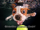 Animals -  underwater dogs/cats  photos