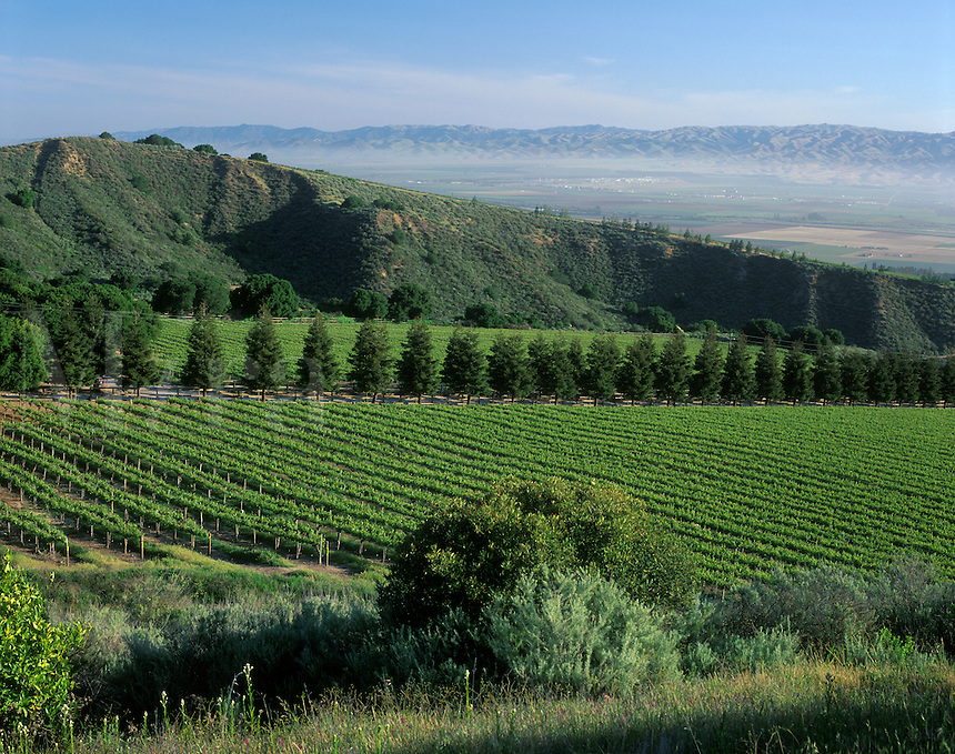 SMITH & HOOK/HAHN ESTATES Vineyard has a spectacular view across the SALINAS VALLEY to the GABILAN MOUNTAINS. - CALIF.