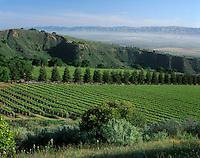 SMITH & HOOK/HAHN ESTATES Vineyard has a spectacular view across the SALINAS VALLEY to the GABILAN MOUNTAINS. - CALIF.
