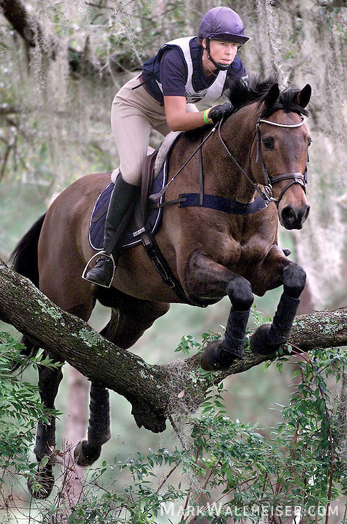"""Victoria Jessup, riding L'Cedric,  looks ahead as they clear a Live Oak limb called the """"Over the Agarista"""" jump which was part of the preliminary course at the Red Hills Horse Trials in Tallahassee, Florida.."""