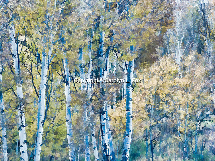 A painterly treatment has been applied to this image of aspen trees.