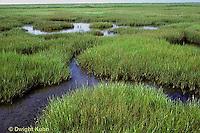 1G06-003c  Cord Grass - short form, high salt marsh, Atlantic Coast  - Spartina alterniflora
