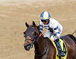 Moonlit Garden (no. 4) wins the Summer Colony Stakes, Aug. 19, 2018 at the Saratoga Race Course, Saratoga Springs, NY.  Ridden by  Jose Ortiz, and trained by Christopher Davis, Moonlit Garden finished 1 1/2 lengths in front of A Place to Shine (no. 2).  (Bruce Dudek/Eclipse Sportswire)