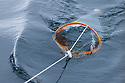 Plankton net being used to urvey marine fauna. Isle of Mull, Scotland, UK, June.