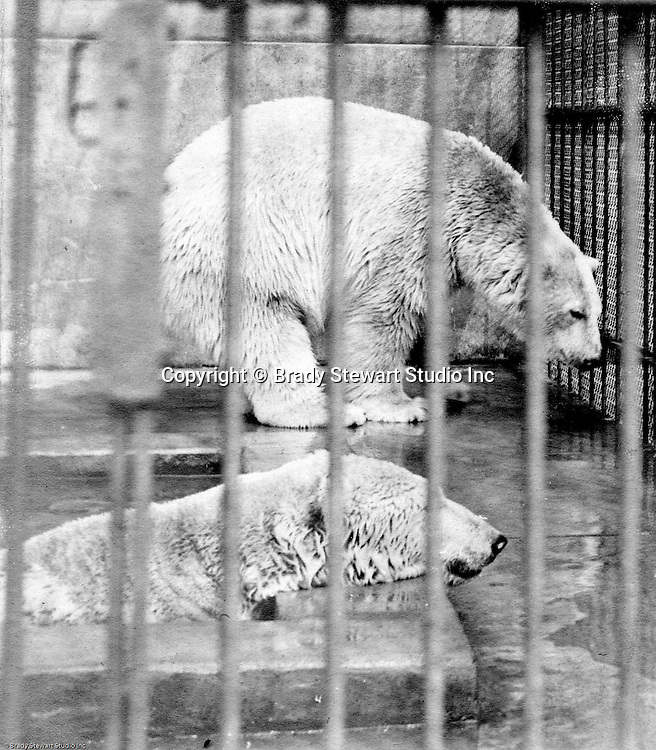 Highland Park:  Two polar bears taking a dip at the relatively new Pittsburgh Zoo.  The zoo opened in 1898 with money donated by Christopher Magee, has evolved into one of the best Zoos for animals - no more cages with concrete floors. The Stewart family visited the park and zoo often since they lived nearby on Wellesley Avenue in Highland Park.